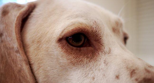 珍犬モグの秘密