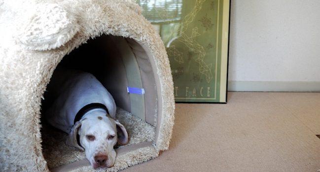 犬型犬小屋