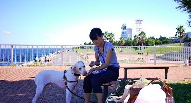 城南島のドッグランと動物愛護相談センター