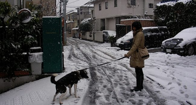 雪の中、迷惑顔のモグ