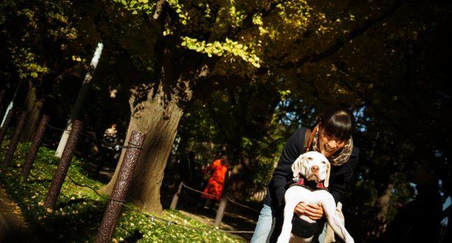 神宮外苑いちょう祭り2012