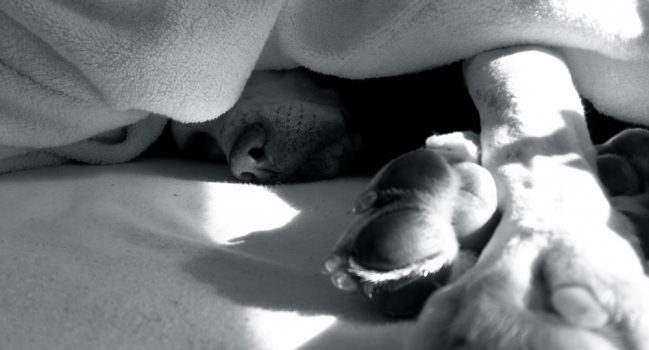果報を寝て待つ犬
