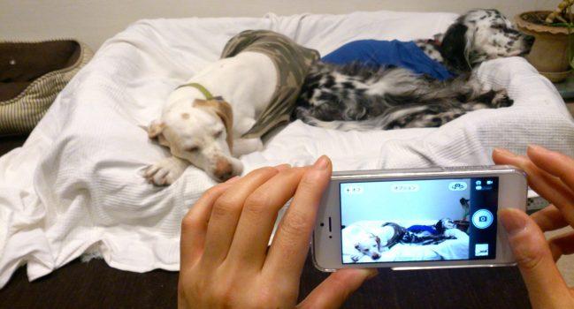 ピノとモグとiPhone5