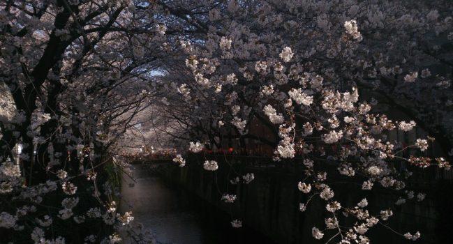 桜の森の満開の下2013