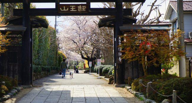 葉桜散歩・碑文谷