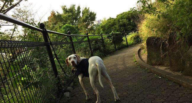 禁犬糞の西郷山公園