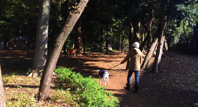 林試の森・秋