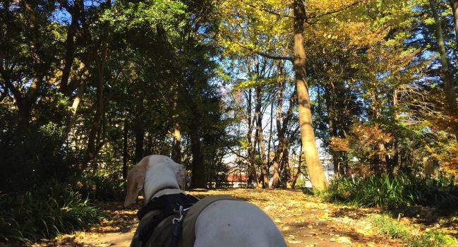 そろそろ紅葉終わりの林試の森