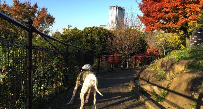 西郷山公園の朝