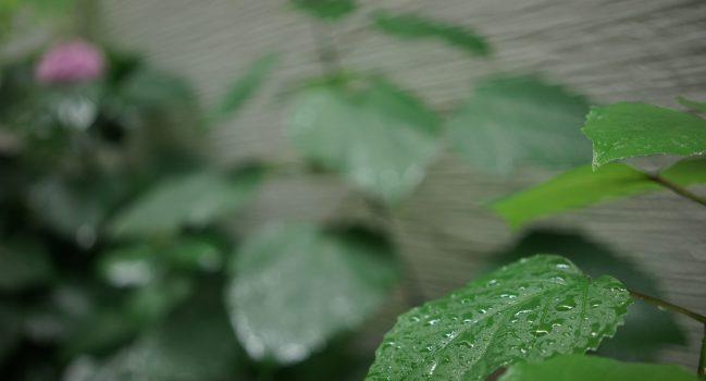 梅雨らしい雨で7月のはじまり