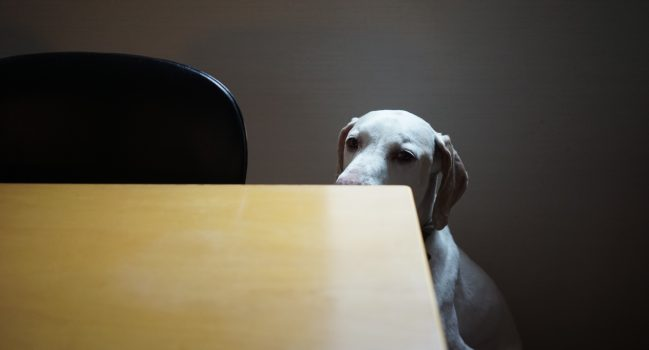 犬ベイベー健太≒狼少年ケン